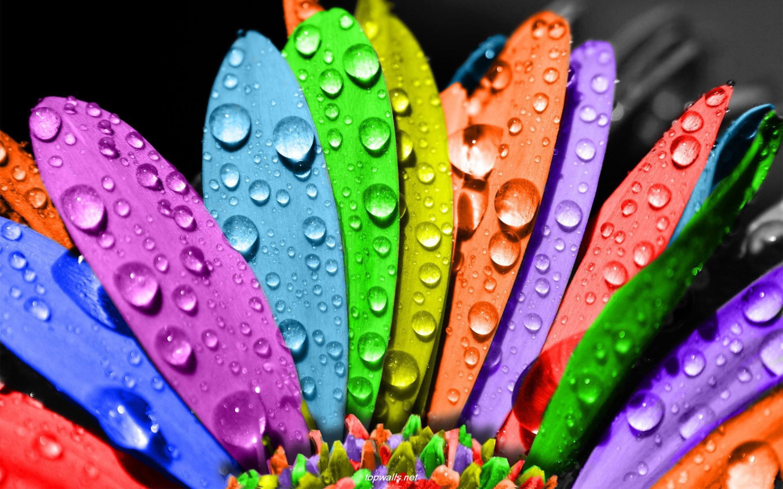 Мова кольорів та типи характеру